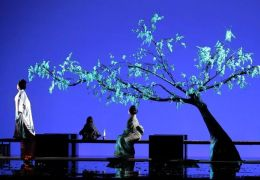 madame butterfly in palma